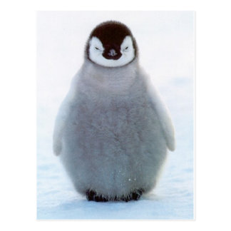 Postal Pingüino del bebé
