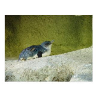 Postal Pingüino lindo del bebé en el parque zoológico de