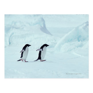 Postal Pingüinos de Adelie, la Antártida