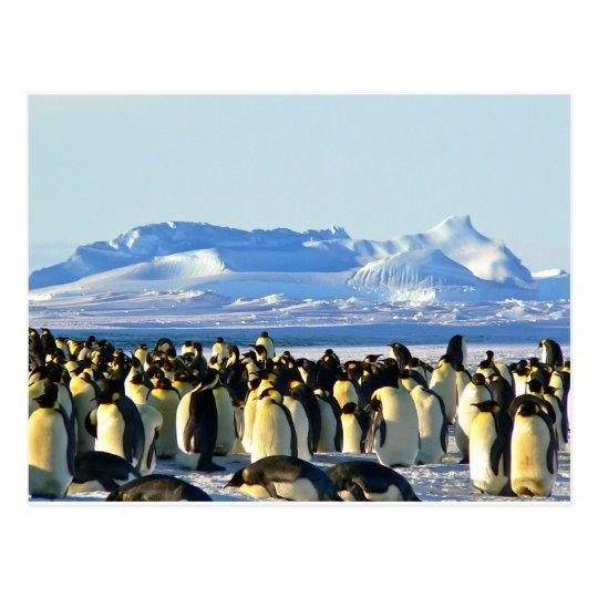 Postal Pingüinos de emperador