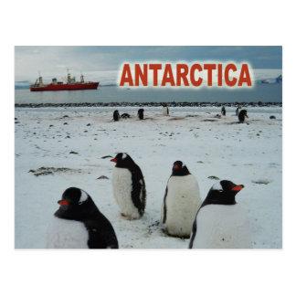 Postal Pingüinos de Gentoo, península antártica