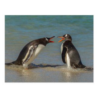 Postal Pingüinos que discuten, Islas Malvinas