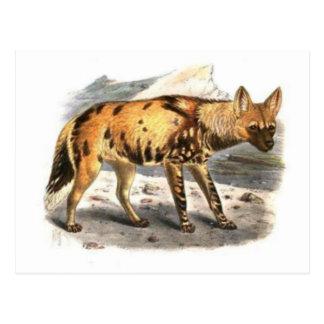 Postal pintada africano del lobo