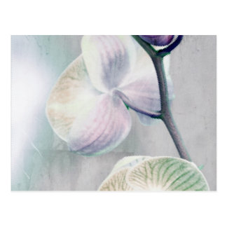 Postal pintada de la orquídea