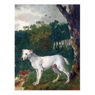 Postal Pintura de bull terrier - bella arte del vintage