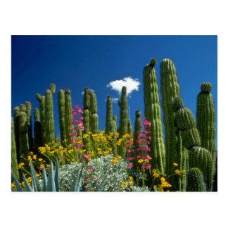 Postal Pique muchas plantas, desierto de Sonoran, flores