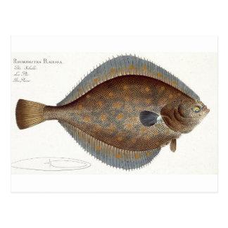 Postal Placa XLII de la platija (Pleuronectes Platessa)