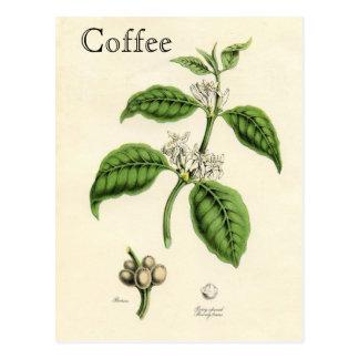 Postal Planta del café del vintage