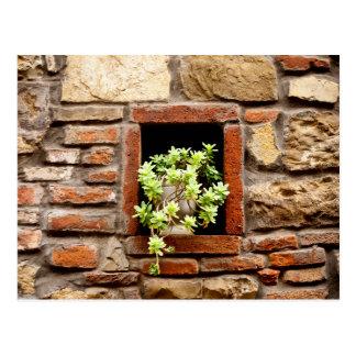 Postal Planta en la pared