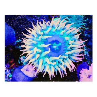 Postal Planta submarina tropical de la anémona