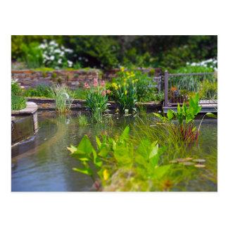 Postal Plantas de agua en los jardines de Powell de la