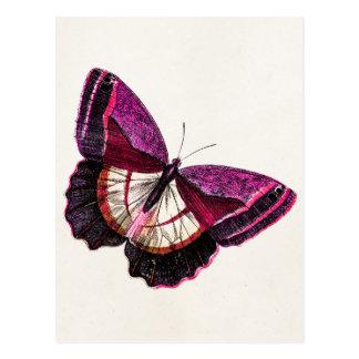 Postal Plantilla en blanco de la mariposa 1896 rosados