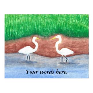 Postal Plantilla herbosa de dos de los Egrets blancos