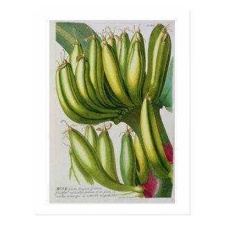 Postal Plátano, grabado por Juan Jacobo Haid (1704-67) pl