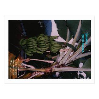 Postal Plátano verde Jamaica