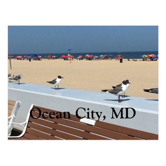 Postal Playa de la ciudad del océano, MD con los pájaros
