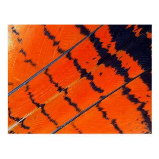 Postal Plumas anaranjadas y negras del Cockatoo