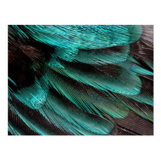 Postal Plumas azules del abrigo de ala