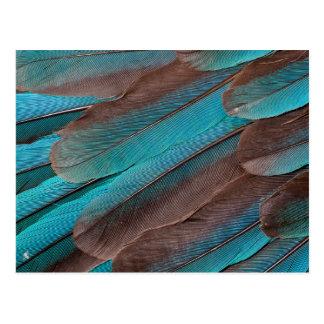 Postal Plumas del ala del martín pescador