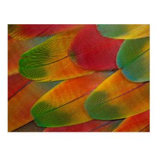 Postal Plumas del loro del Macaw del Harlequin