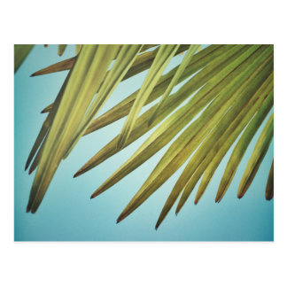 Postal Plumero de palmera al cielo de verano