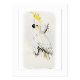 Postal Poco cockatoo azufre-con cresta
