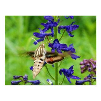 Postal Polilla de colibrí
