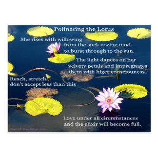 Postal Polinating Lotus