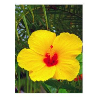 Postal Postal, hibisco amarillo hawaiano