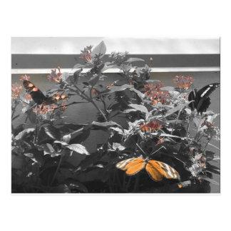 Postal Postal: Mariposas/flores