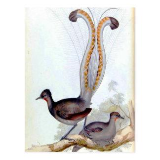 Postal Poster del vintage del pájaro del Lyre