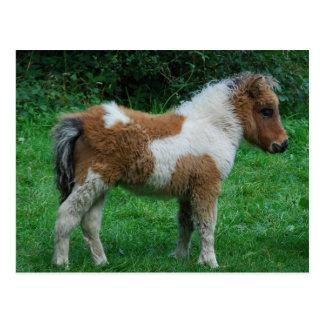 Postal Potro adorable mullido de Dartmoor