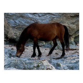 Postal Potro de Dartmoor en rocas en la playa del sur