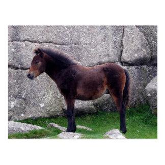 Postal Potro del potro de Dartmoor que abriga rocas de la