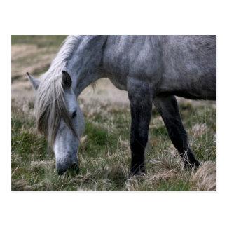 Postal Potro salvaje en Dartmoor, Devon