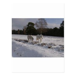 Postal Potros en la nieve
