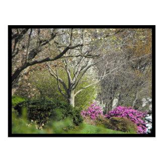 Postal Primavera del ~ en el ~ 17 del condado de