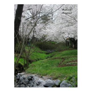 Postal Primavera en Bethesda, Maryland