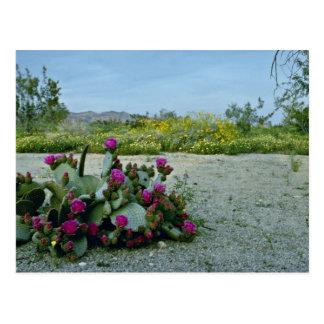 Postal Primavera en las flores del rosa del desierto de