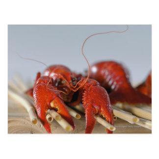 Postal Primer de un cangrejo en los palillos