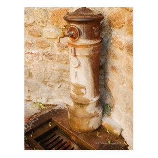 Postal Primer de un grifo, provincia de Siena, Toscana,