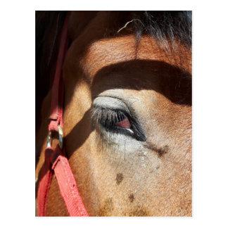 Postal Primer del caballo en la feria de mundo de Rockton