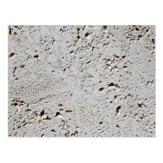 Postal Primer fósil de la superficie de la teja del