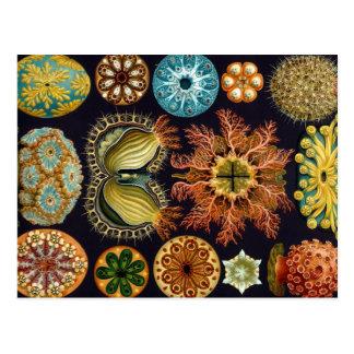 Postal Productos múltiples de Haeckel Ascidiae