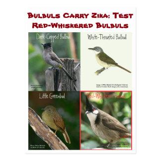 Postal Pruebe los Bulbuls Rojos-Whiskered por RoseWrites