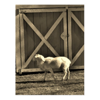 Postal Puertas de la cabra y de granero del tono de la