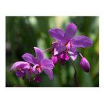 Postal púrpura de la flor de la orquídea