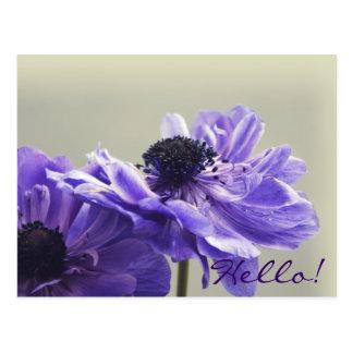 Postal púrpura de la foto de la anémona