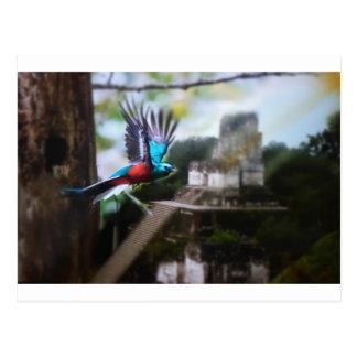 Postal Quetzel en Tikal