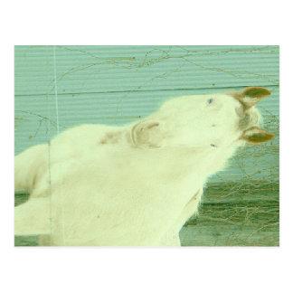 Postal Quiero ser un unicornio
